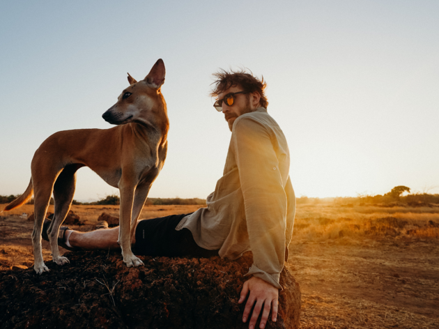 Dog on a trip with owner