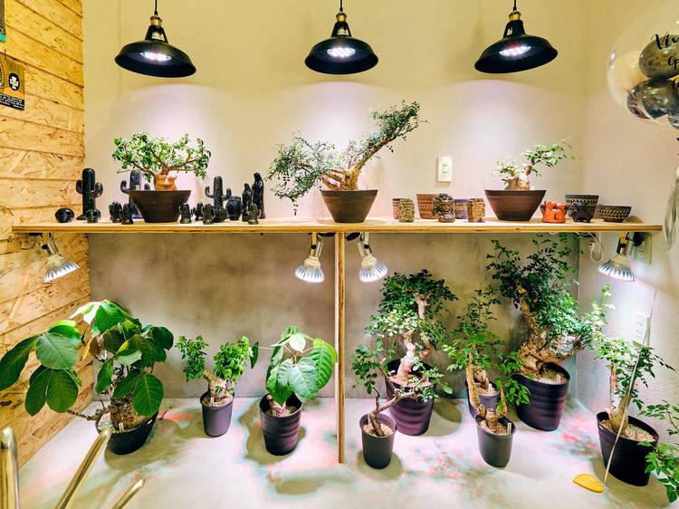 池ノ上にメキシコの灌木や雑貨を扱う店、ヴィヴェロ トーキョーがオープン