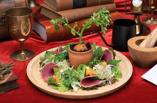 薬草学サラダ