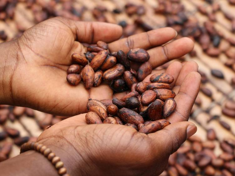 Reading between the lines: cacao vs. cocoa