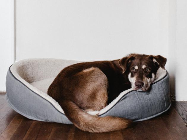 Stock photo of dog