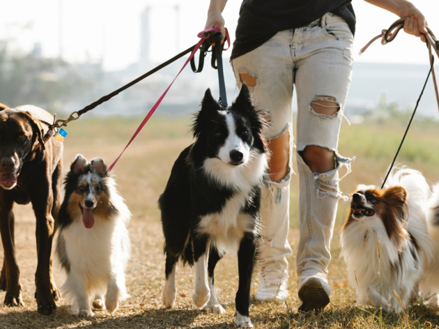 A guide to the best dog breeds for Melburnians