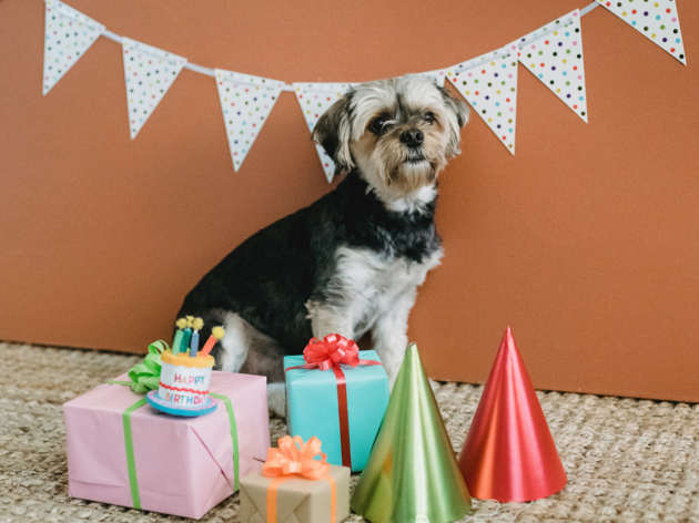 Host a puppy party
