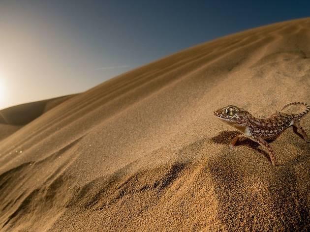Vuelta a África: memorias de una biodiversidad perdida (Museo Nacional de Ciencias Naturales)
