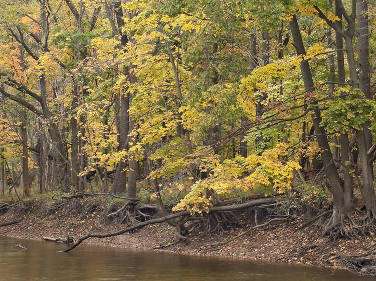 Edward L. Ryerson Conservation Area