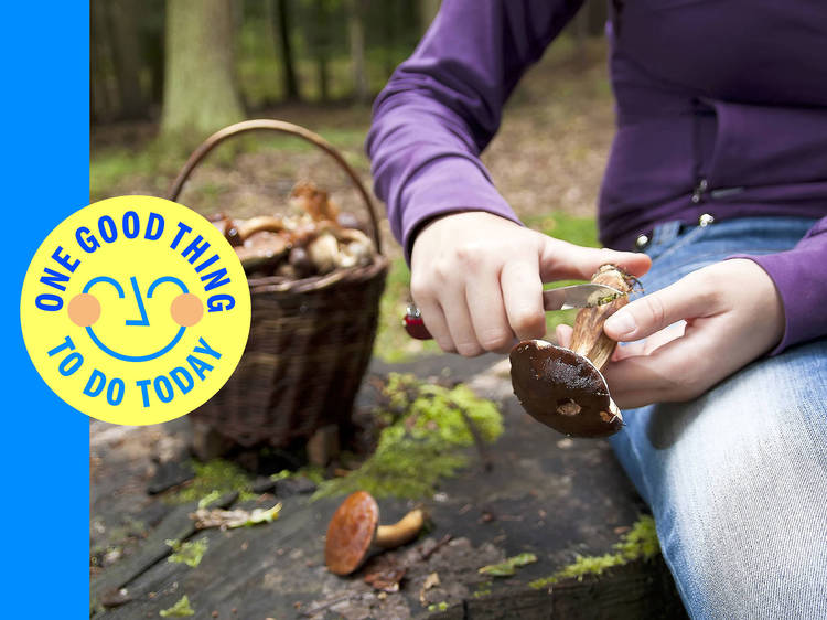 Channel your inner scout and learn to forage for nutritious fungi