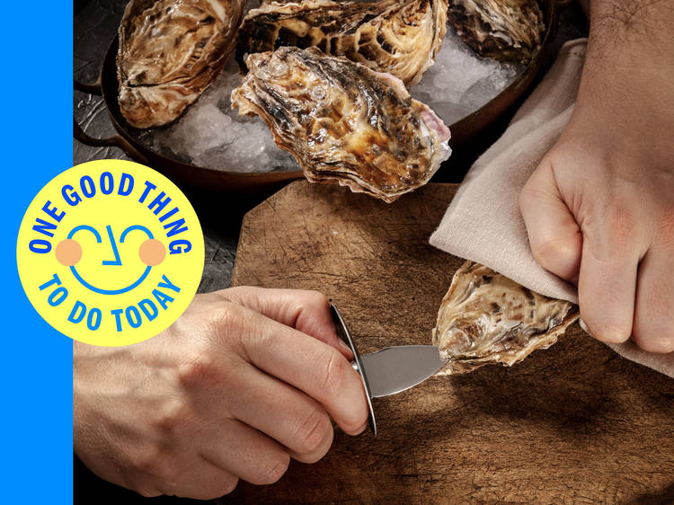 Shuck your own oysters on the North Fork
