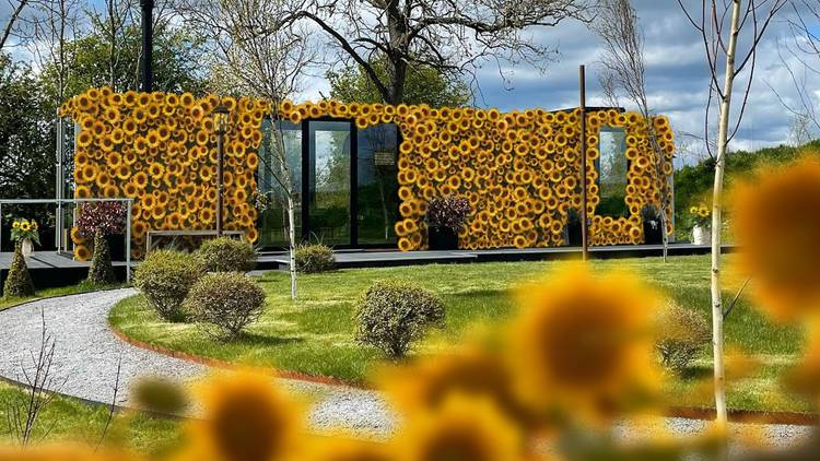 Sunflower-covered hotel in North Yorkshire