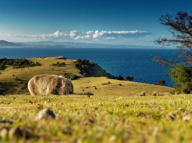 Maria Island, Australia
