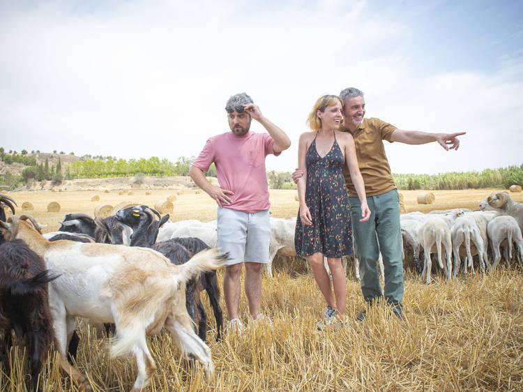 Cómo se heredan 512 ovejas