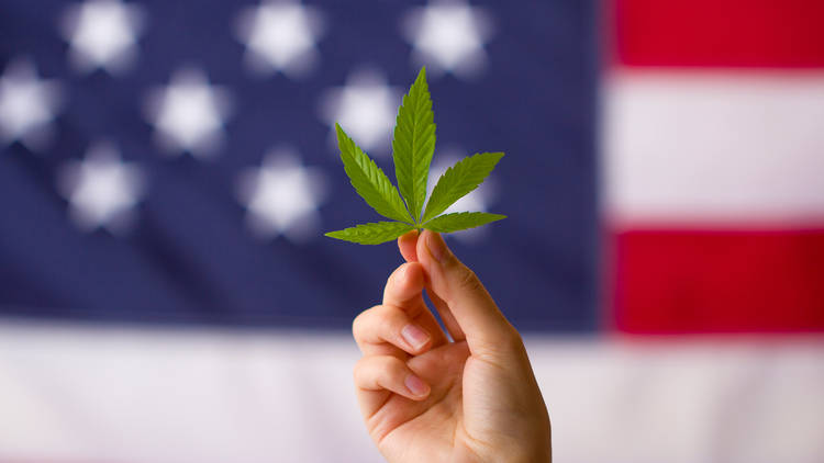 Cannabis leaf in hand with American flag background