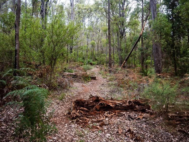 King Jarrah Walk Trail, Lane Poole Reserve, Dwellingup