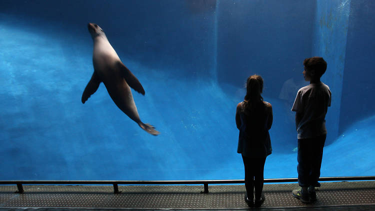 Two children watch a seal in a tank at Melbourne Zoo