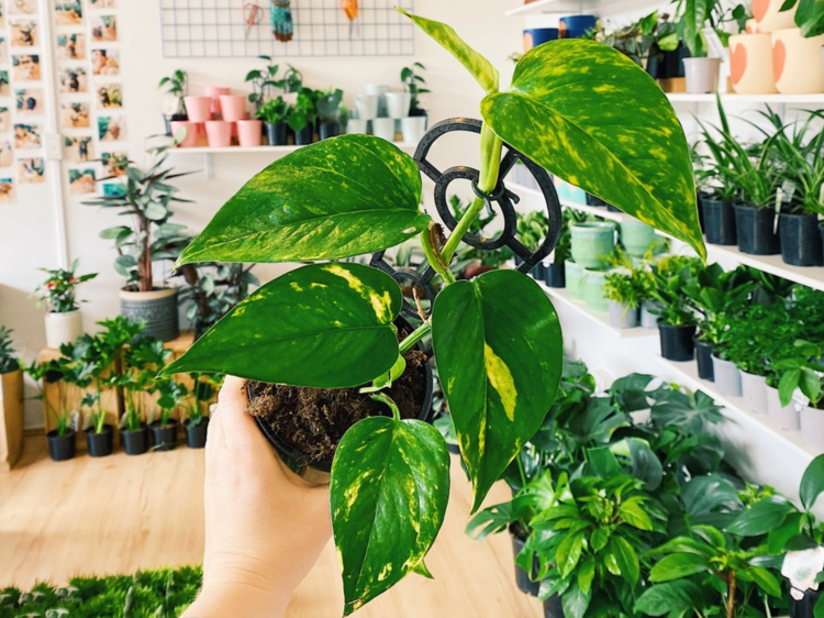 Go green with these low-maintenance indoor plants