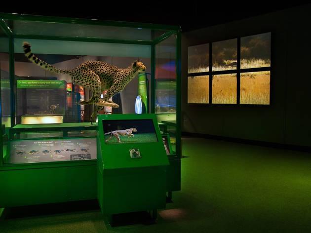 The Machine Inside: Biomechanics exhibition