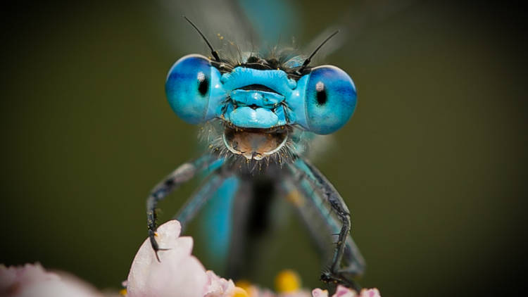A smiling blue insect