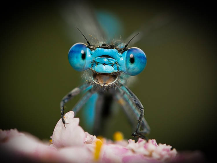 笑える野生動物写真賞、最優秀作品はどれに?