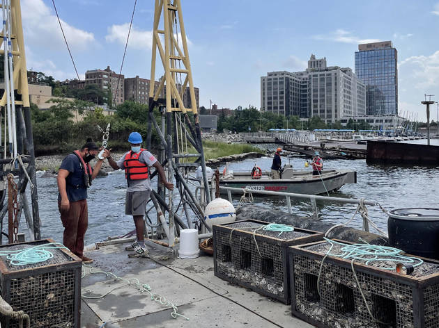 Billion Oyster Project wants to create a more sustainable NYC through bivalves