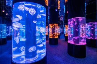 Cube O Discovery Park