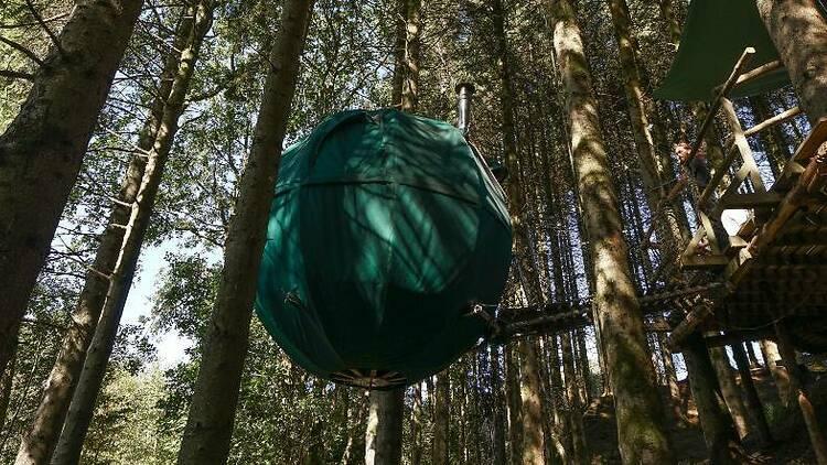 Ynys Affalon Tent Tree