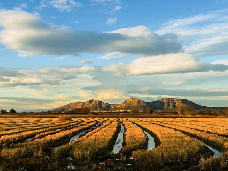 La plana de l'Empordà: vins, olis i arròs