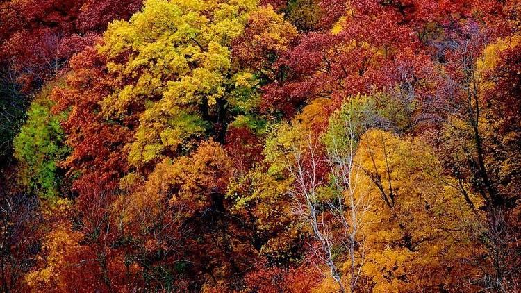 Galena Trail fall foliage