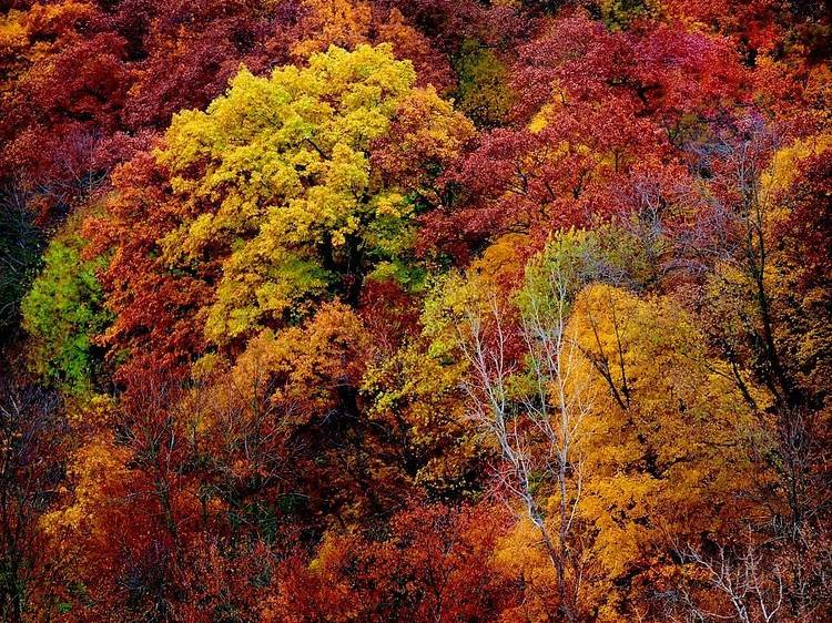 Where to see fall foliage near Chicago