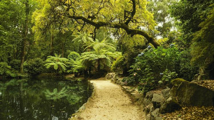 The forests of the Dandenong Ranges.