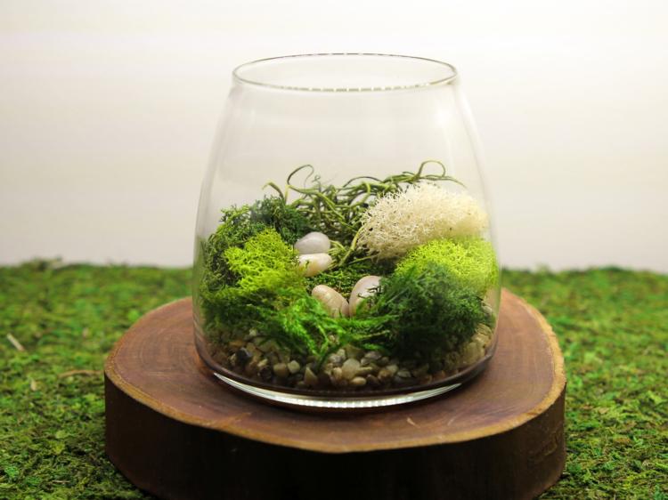 'Tranquillity' Terrarium DIY Kit, $49.50