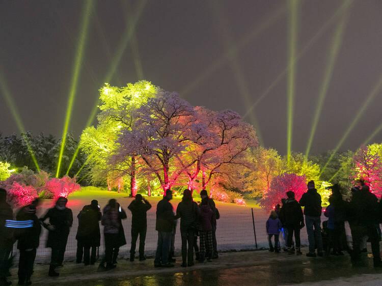Illumination: Tree Lights at Morton Arboretum