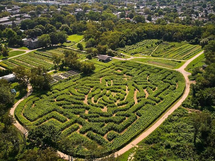 Queens County Farm Museum's massive corn maze is inspired by Andy Warhol