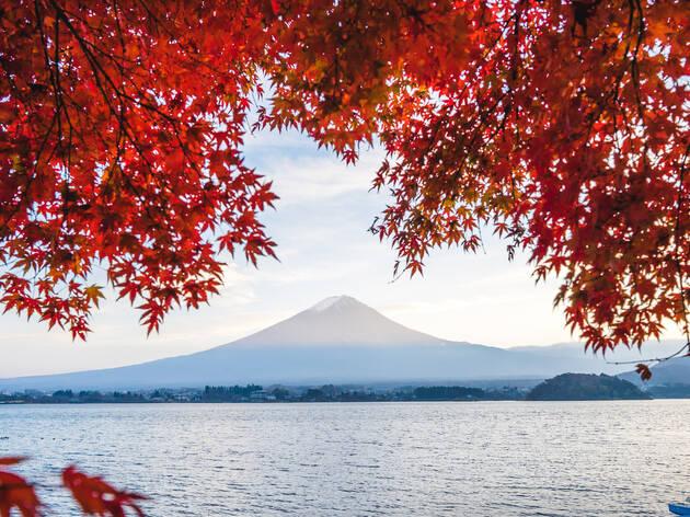紅葉情報が解禁、東京は11月中旬がピーク