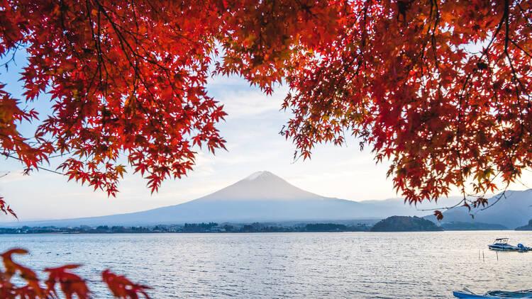 Lake Kawaguchiko, autumn leaves