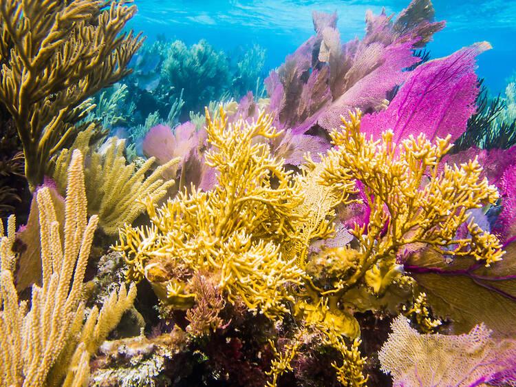 The Mesoamerican Barrier Reef