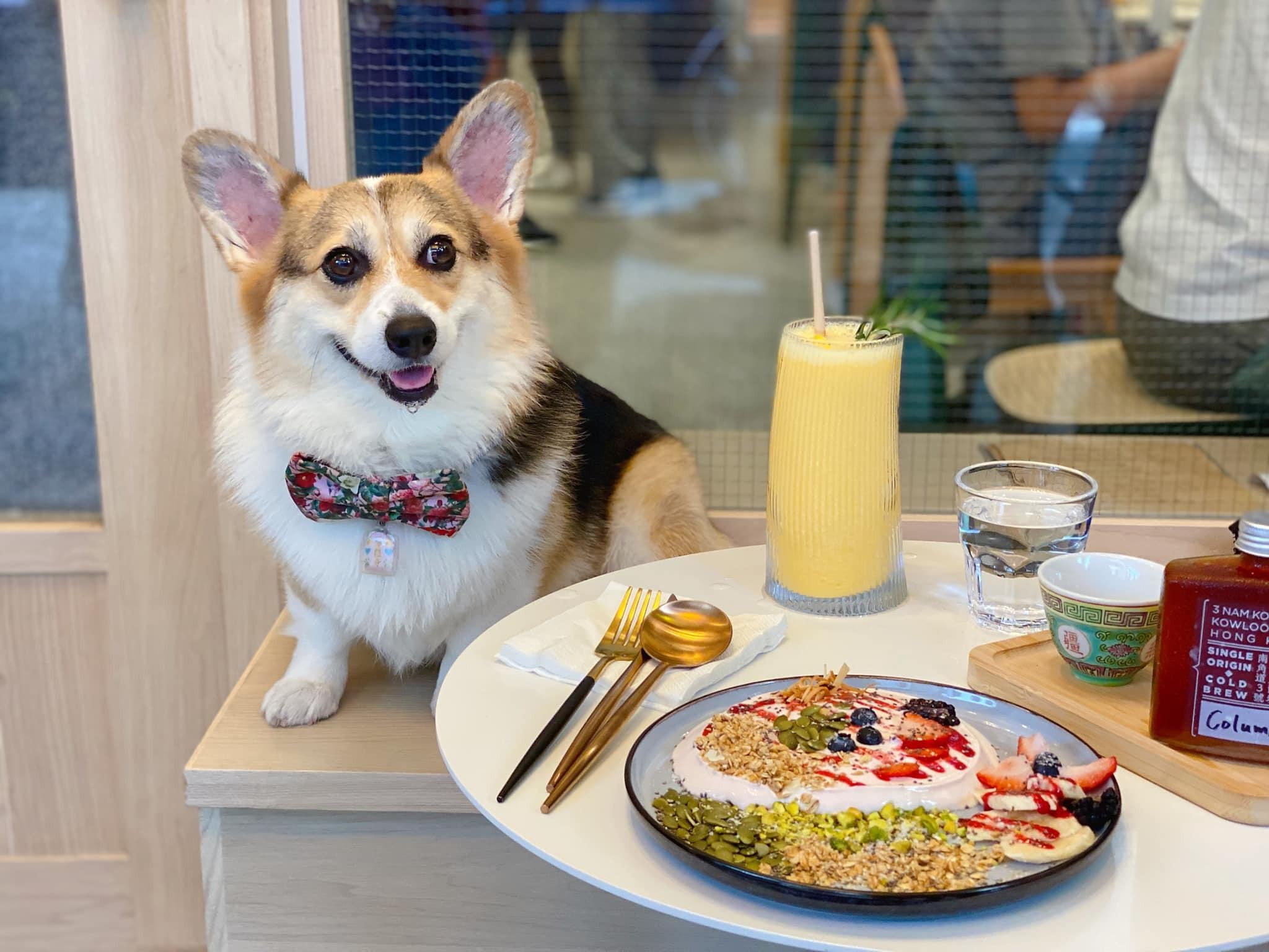 狗狗好去處!九龍六間寵物友善餐廳