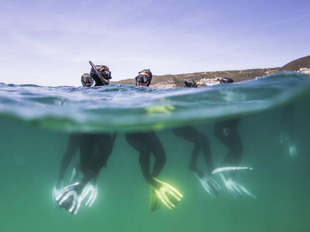 Depois das crianças, Sesimbra mergulha com os adultos na ecologia subaquática