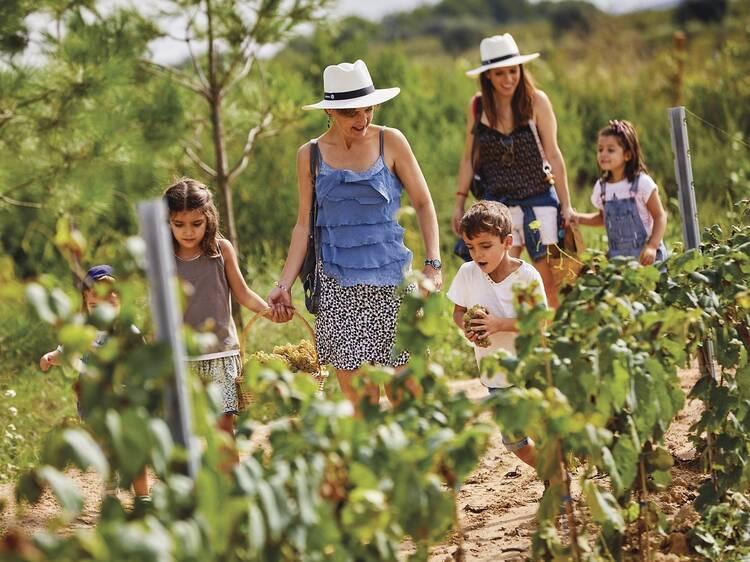Entre la verdor de las viñas
