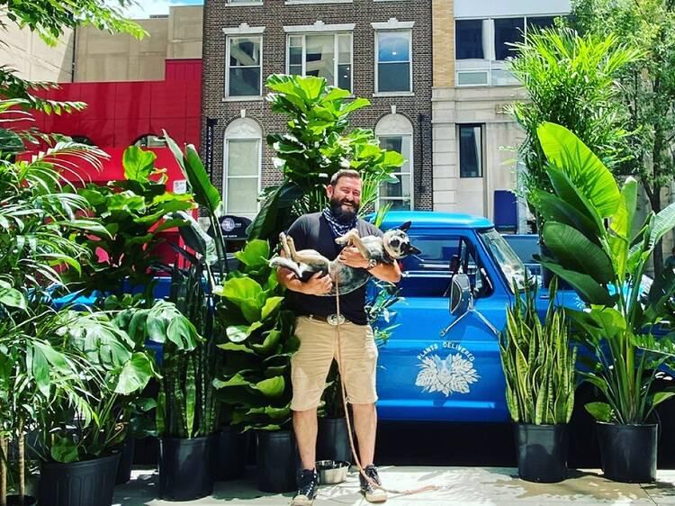 Plants Delivered Chicago
