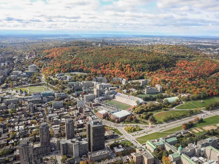 Le premier jour de l'automne à Montréal : Cette carte suit les couleurs de la saison