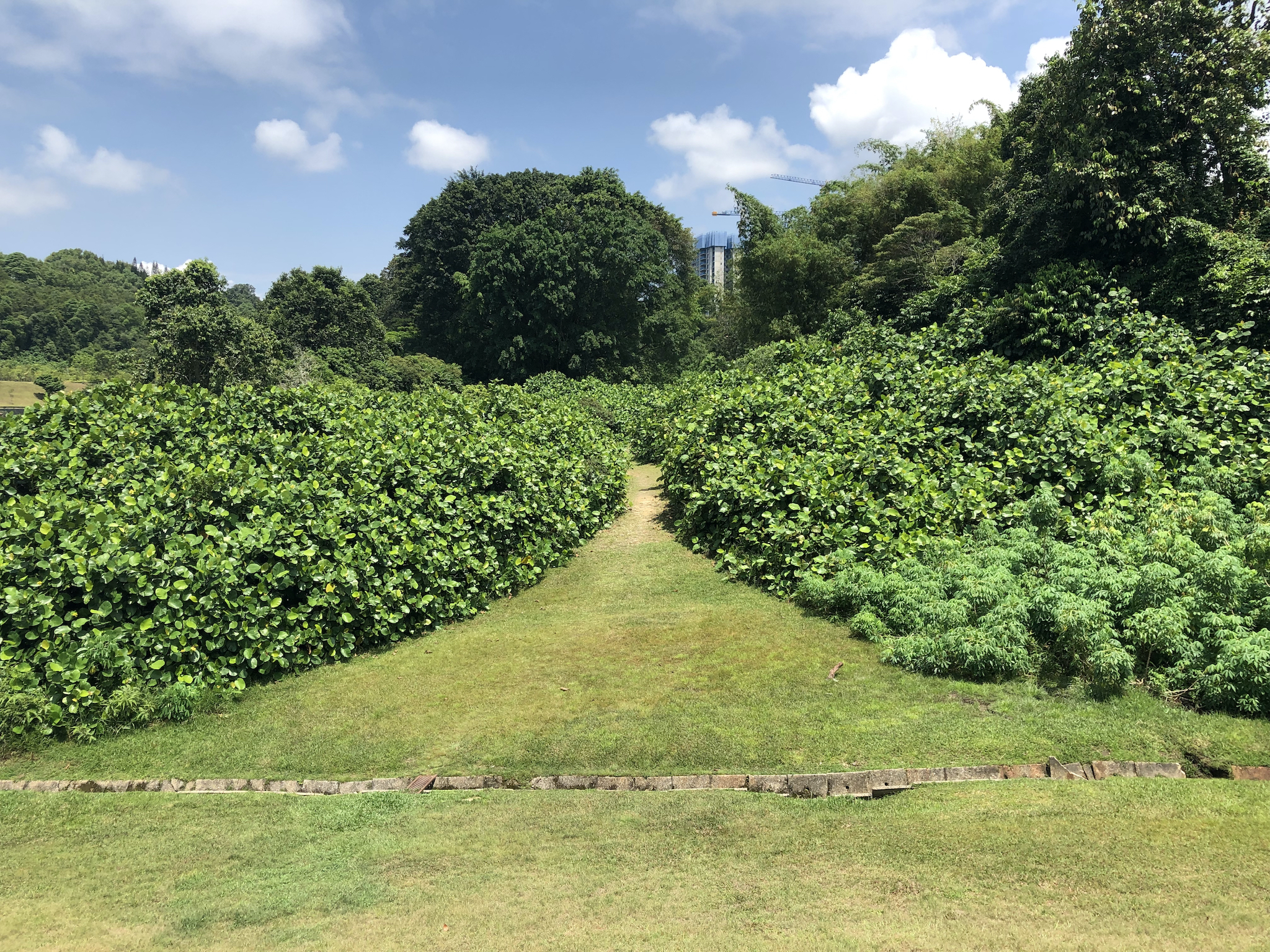 The best spots for a picnic in Singapore