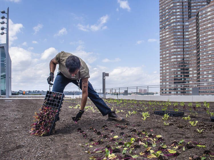 There's now a farm and orchard on top of the Javits Center