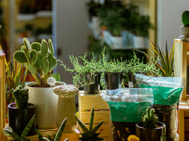 Plant parents, rejoice! The Sill is expanding in Brooklyn