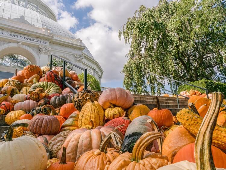 Scarecrows & Pumpkins at NYBG