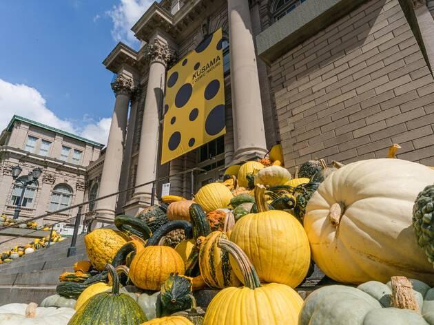 NYBG pumpkins