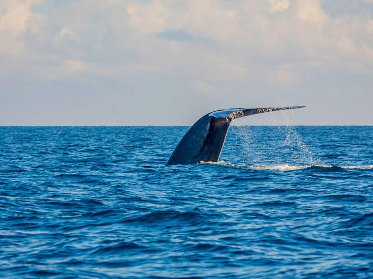 Marine conservation programmes in Sri Lanka