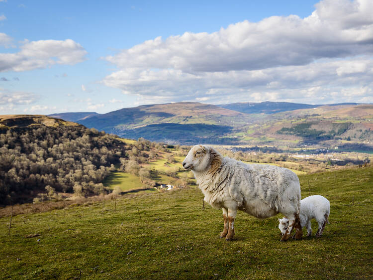 Championing sustainable farming in Wales