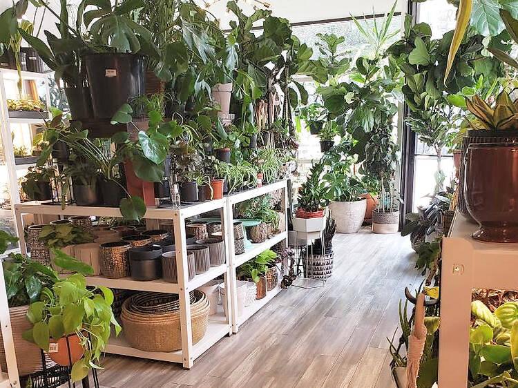 Plant Salon