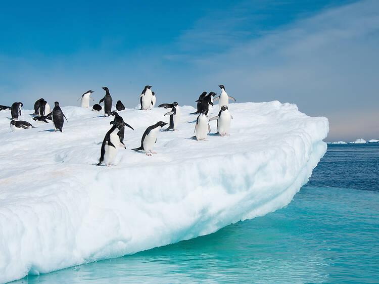 Roam alongside penguins in Antarctica