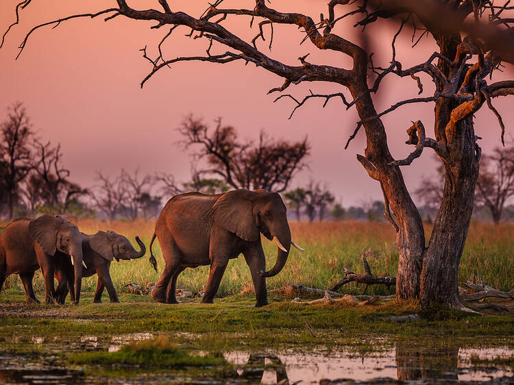 Book a community-conscious safari in Botswana