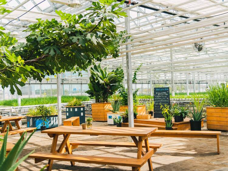 Pumpkin carving in one of the world's largest rooftop greenhouses